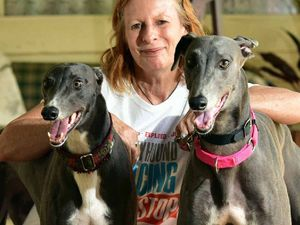 Rush to help greyhound 'victims' in wake of baiting scandal