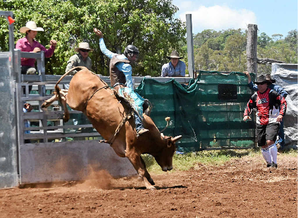 HOT TIME IN THE SADDLE: Matthew Young rides bull Jalapeno at the Bell Show rodeo.