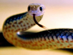 YOUR STORY: 98-year-old remembers irate brown snake