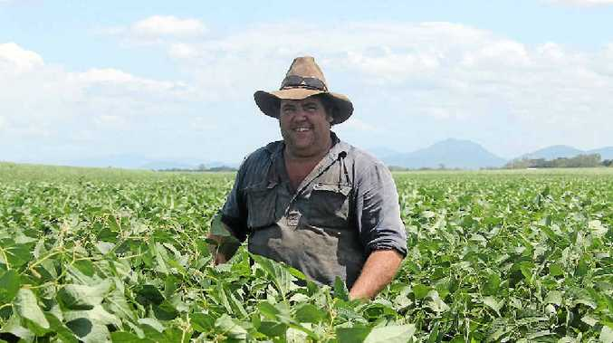 BIG BEANS: Whitsunday cane farmer Bill Blair with his super soybean crop, which should prove quite a money-spinner this season, in addition to boosting soil nutrients.