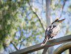 Tours of Tondoon Botanic Gardens in Gladstone will begin again in April.