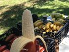 Read about the new bananas on the block on Saturday.