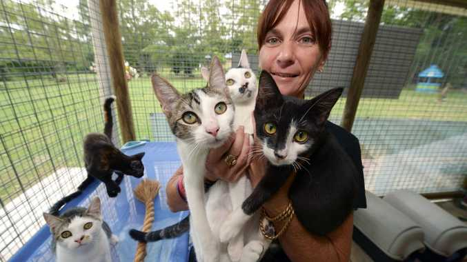 SOPHISTI-CAT: Bundaberg RSPCA manager Karina Taylor is excited to promote Sophisti-Cat, with a special on this Saturday of $99 for any cat over four months. This offer includes free kitty litter nad free cat food as well. Photo: Max Fleet / NewsMail
