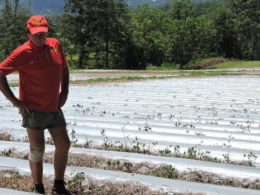Calen farmer Alan Ballantyne said he could lower the price of his strawberries with better consumer support.