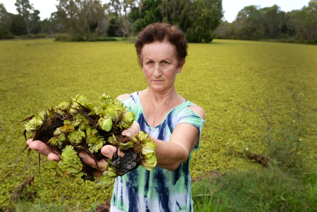 WATER WEED: Susan Krebs is upset at the growth of weed on the pond at Baldwin Swamp. Photo: Mike Knott / NewsMail