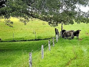 COUNTRY LIFE: Visitors will be able to learn all about life on the land at The Farm Byron Bay.