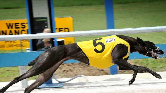 Casino Greyhounds