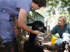 Wild dogs attack school's alpacas, killing one