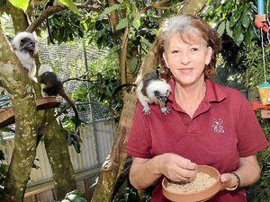 Tale behind local zoo rivals Noah's Ark