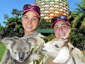 Party animals don't mind the noise says Qld Zoo
