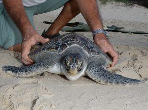 New guide offers advice on marine animal strandings