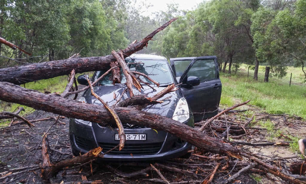 SHOCKING MOMENT: Venessa McGrath's photo of her car crushed by a fallen tree.