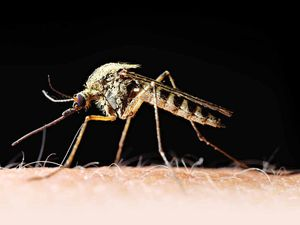 Experts seek 2050 malaria eradication
