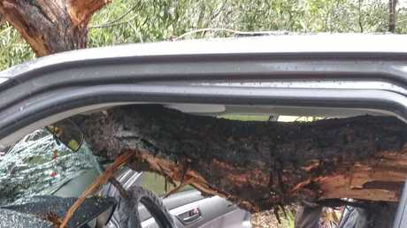 The branch that burst into the cabin of Venessa McGrath's car, narrowly missing her and her daughter.