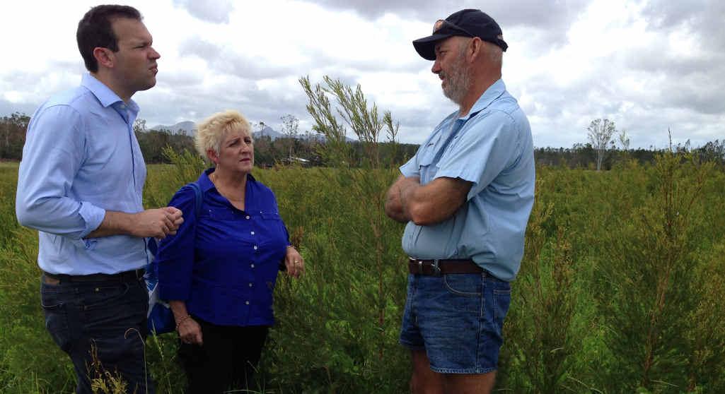 DEVASTATED: Rockhampton-based Senator Matt Canavan, Michelle Landry MP and tea tree plantation owner Jordan Slarke at Byfield.