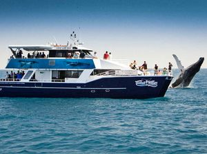 Tasman Venture whale watching cruise listed as the best
