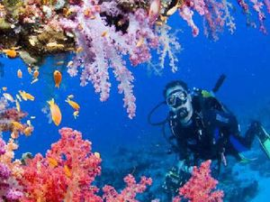 Take a breath: tips for playing it safe while scuba diving
