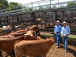 If you have cattle to sell, sell them now