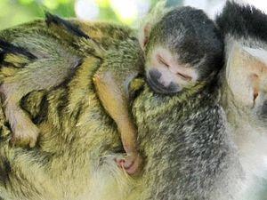 Baird to fund Taronga Zoo upgrade