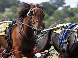 Trot meeting to support Rosewood Equestrian