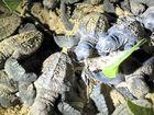 BOOK NOW: The Mon Repos turtle tour season will finish on Sunday.