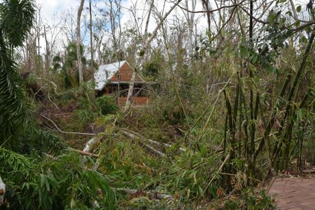 A cabin at Rainforest Retreat in Byfield, which took owners Jeanie and Warren O'Leary weeks to clear a path to after the cyclone. Photo Rachael Conaghan/The Rural Weekly