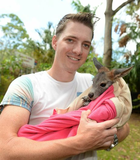 Kieron Smedley with Jack, an orphaned wallaroo being looked after at Cooberie Park despite the damage wrought on the place by Cyclone Marcia. Photo: Chris Ison / The Morning Bulletin