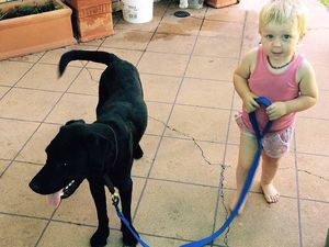 Unspoken rules between dogs and children?