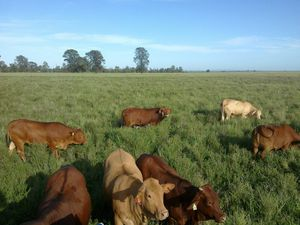 Legume grass a hot topic at field day for graziers