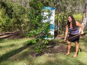 Peace Tree planted to celebrate region's diversity