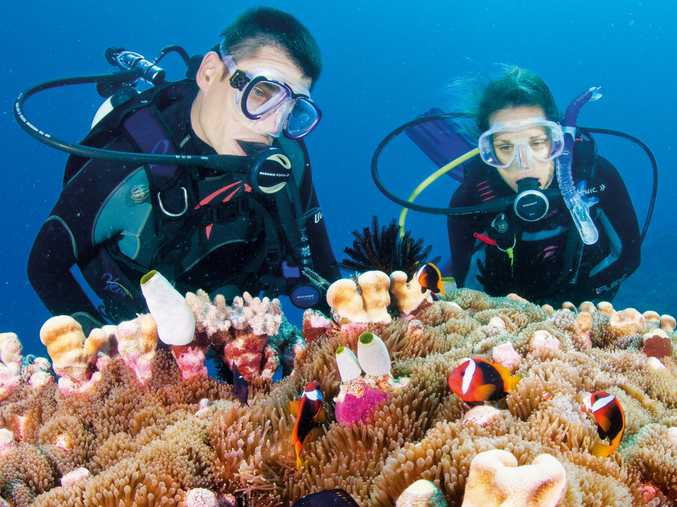 Thinking about diving? You must have completed a training course.  Photo: Tourism and Events Queensland