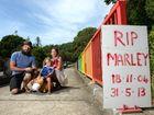 David Cross, Abbyrose Cross and Raquel Morton at the bridge in Uki. Photo: John Gass / Tweed Daily News
