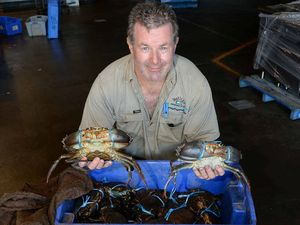 Crab catch claws back for first time since 2007 fish kill