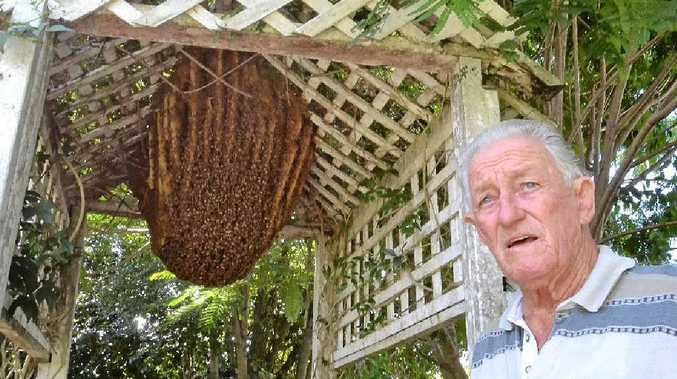 NATURAL BEAUTY: Max Gray of Casino with the thousand or so freeloading bees who have taken up residence in his backyard for the past seven years.