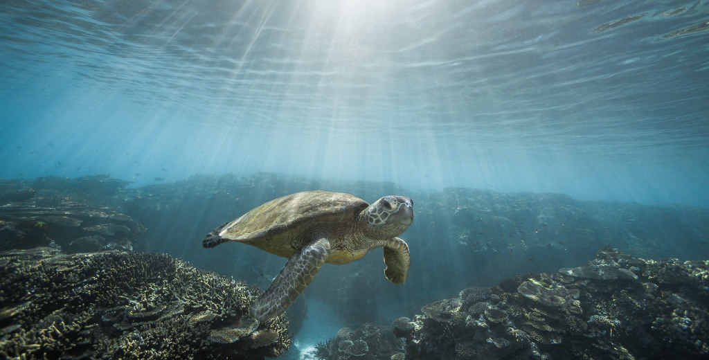 ANOTHER WORLD: Noosa photographer Justin Bruhn's snap of a turtle and (below) Justin in action.