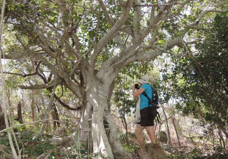 Sharyn Moodie photographing butterflies on Great Keppel Island.