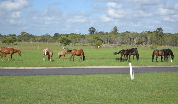 WILD HORSES: The horses which are to be removed from the Kinkuna Waters Estate near Woodgate. Photo: contributed