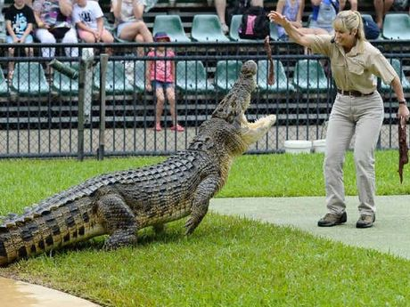 DANGEROUS PURSUIT: Terri Irwin feeds a crocodile at the Australia Zoo Crocoseum.