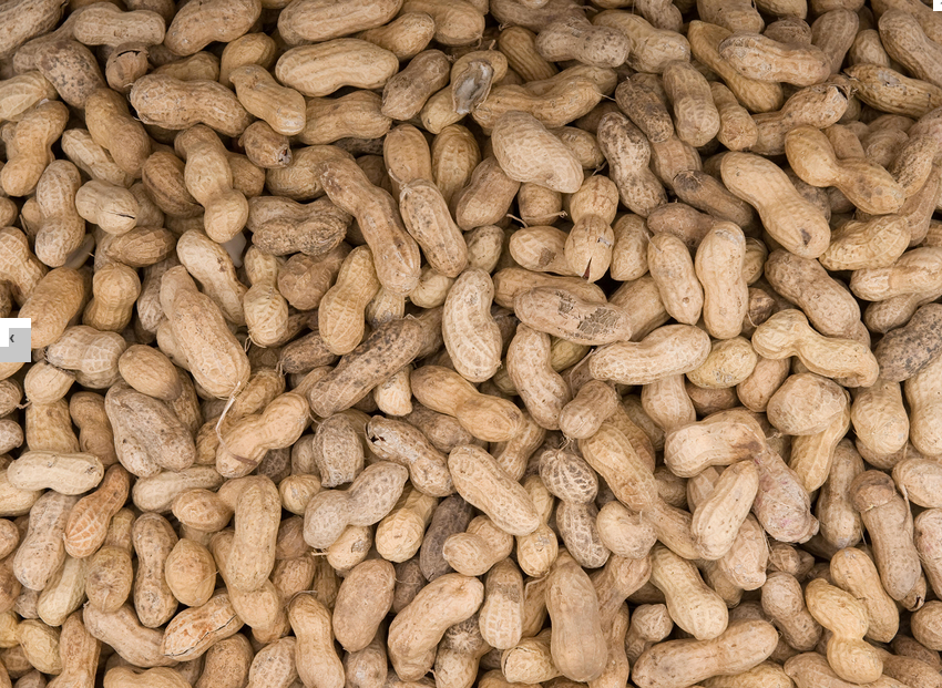 There are up to ten deaths a year in Britain due to allergies to foods like nuts.
