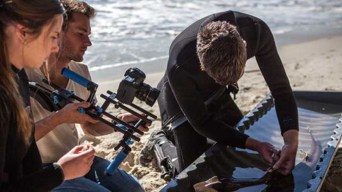 James Sherwood from Bluebottle Films, filming researcher Nathan Bass tagging a Port Jackson shark. Photo Contributed