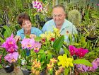 BLOOMING LOVELY: Gladstone Orchid and Foliage Society member Sunny Jenkinson and president Len Dowling are getting ready for the Easter display.