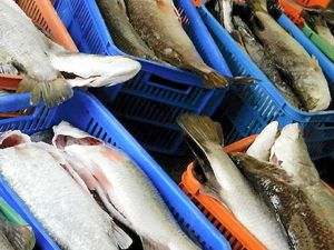 Public outrage at 'light' punishment for over fishing