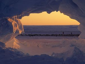 Antarctica hits a balmy 17.5 C thanks to global warming
