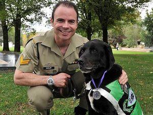Australia's bravest dog Sarbi loses cancer battle