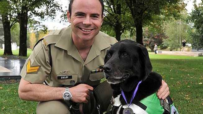 Explosive Detection Dog Handler Corporal Adam Exelby with Explosive Detection Dog Sarbi who received the Purple Cross from the RSPCA. The RSPCA Australia Purple Cross represents outstanding animal service or sacrifice, and has been awarded only seven times previously.