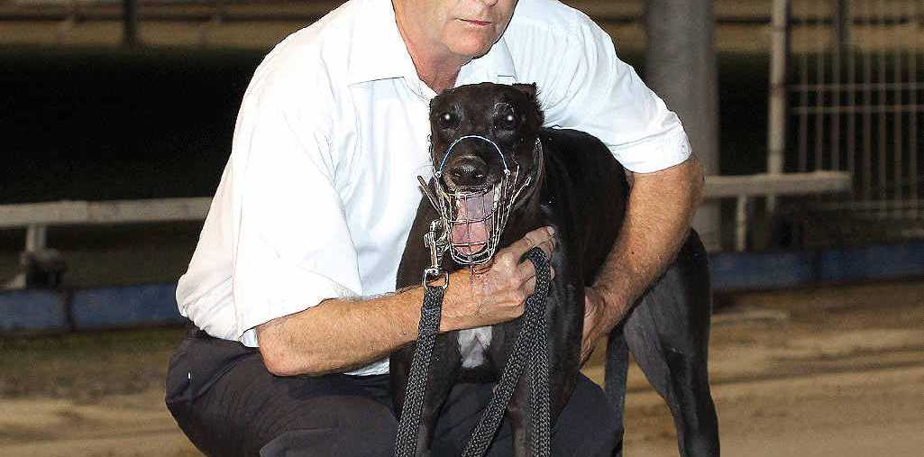 TWIN CHALLENGE: Casino's Mark Wilkes is hoping to score a memorable victory with his greyhound War Picture in tonight's auction final at the Ipswich Showgrounds. Wilkes has a second runner In The Picture.