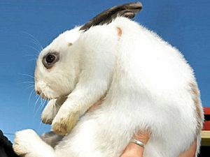 Couple fined for keeping rabbit as children's pet