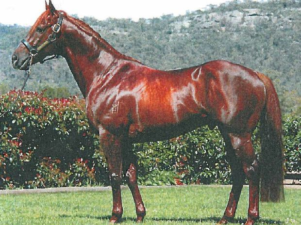 HORSE FLESH: Oaklands Stud will offer four of the progeny of first season sire Sidereus at the Capricornia Yearling Sales on Sunday, April 12. His yearlings have captured buyers attention at both Magic Millions Sales earlier this year on the Gold Coast.
