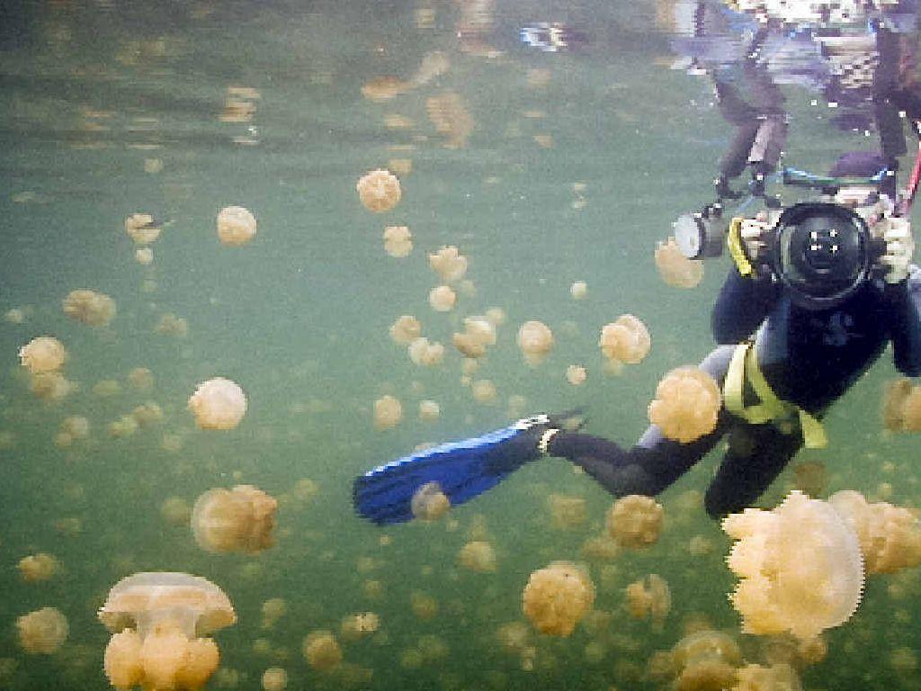 JELLY BLUBBERS: Liz Harlin snaps her way through a swarm of jellyfish