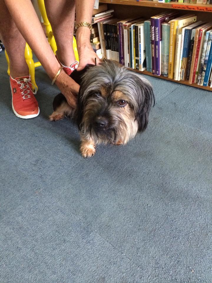 The dog, who has been nicknamed Bundy.